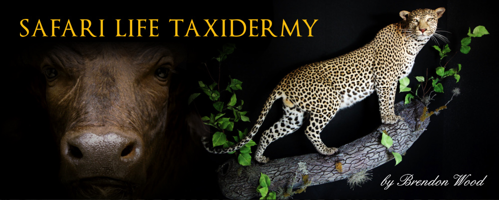 Safari Life Taxidermy - preserving Africa through artistry